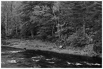 Trees in fall foliage on riverbank of East Branch Penobscot River. Katahdin Woods and Waters National Monument, Maine, USA ( black and white)