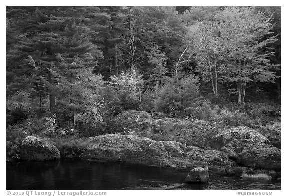 Rocks and trees in fall foliage, along East Branch Penobscot River. Katahdin Woods and Waters National Monument, Maine, USA (black and white)