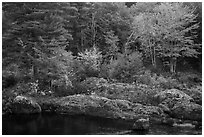 Rocks and trees in fall foliage, along East Branch Penobscot River. Katahdin Woods and Waters National Monument, Maine, USA ( black and white)