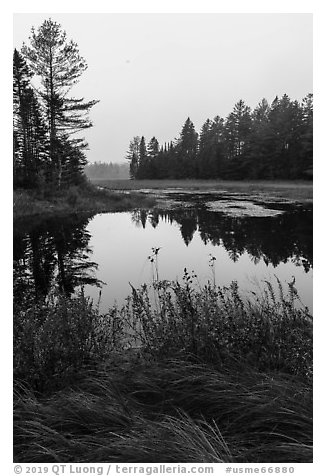 Grasses and pond, Sandbank Stream. Katahdin Woods and Waters National Monument, Maine, USA (black and white)