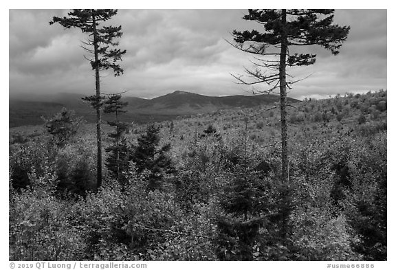 Transitional deciduous northern hardwood forest and struce fir mix. Katahdin Woods and Waters National Monument, Maine, USA (black and white)