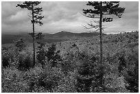 Transitional deciduous northern hardwood forest and struce fir mix. Katahdin Woods and Waters National Monument, Maine, USA ( black and white)