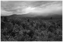 Northern hardwood forest in autumn foliage and cloud-capped Katahdin. Katahdin Woods and Waters National Monument, Maine, USA ( black and white)