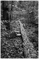 Boardwalk. Katahdin Woods and Waters National Monument, Maine, USA ( black and white)