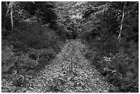 Wassatotaquoik Road in autumn. Katahdin Woods and Waters National Monument, Maine, USA ( black and white)