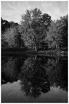Trees in autunm foliage reflected in East Branch Penobscot River. Katahdin Woods and Waters National Monument, Maine, USA ( black and white)