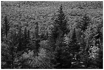 Spruce and valley covered by northern hardwood trees in autumn. Katahdin Woods and Waters National Monument, Maine, USA ( black and white)