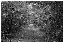 Gravel road and tunnel of trees in autumn. Katahdin Woods and Waters National Monument, Maine, USA ( black and white)