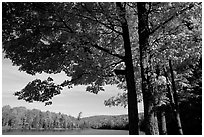 Tree and lake, Hiawatha National Forest. Upper Michigan Peninsula, USA (black and white)