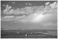 Field of grasses with hay rolls and big sky. North Dakota, USA (black and white)