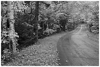 Rural road in autumn, White Mountain National Forest. New Hampshire, USA ( black and white)