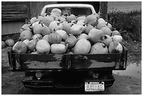 Truck loaded with pumpkins. New Hampshire, USA (black and white)