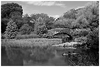 Pond and stone bridge, Central Park. NYC, New York, USA ( black and white)