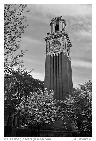 Trees in bloom and Carrie Tower, Brown University. Providence, Rhode Island, USA