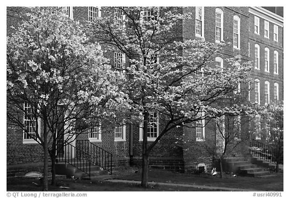 Dogwoods in bloom and University Hall at dusk, Brown University. Providence, Rhode Island, USA