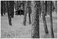 Cabins in forest, Custer State Park. Black Hills, South Dakota, USA (black and white)