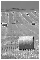 Rolls of hay in summer. South Dakota, USA (black and white)