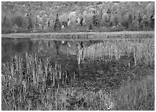 Autumn Reflections, Green Mountains. Vermont, New England, USA (black and white)