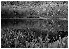 Reeds, and reflection of hill, Green Mountains. Vermont, New England, USA (black and white)