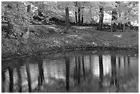 Pond with tree reflections. Vermont, New England, USA (black and white)