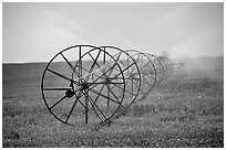 Irrigation wheels spraying water. Idaho, USA (black and white)