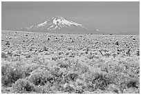 Sagebrush desert and Mt Hood. Oregon, USA (black and white)