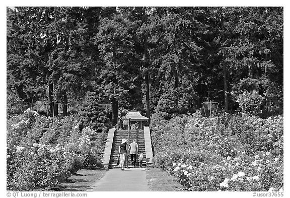 Alley in Rose Garden. Portland, Oregon, USA (black and white)