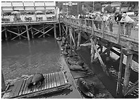 Tourists looking at Sea Lions from pier. Newport, Oregon, USA (black and white)