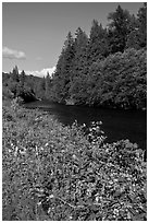 McKenzie River. Oregon, USA ( black and white)