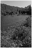 Flowers near McKenzie River. Oregon, USA ( black and white)