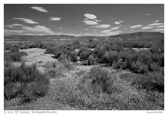 Shrubs in Eastern Oregon high desert. Oregon, USA (black and white)