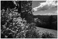 Blooms and Siskiyou Mountains. Cascade Siskiyou National Monument, Oregon, USA ( black and white)