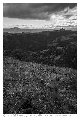 Wildflowers and distant Pilot Rock. Cascade Siskiyou National Monument, Oregon, USA (black and white)