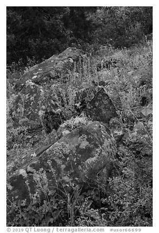 Rocks and wildflowers. Cascade Siskiyou National Monument, Oregon, USA (black and white)