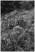 Rocks and wildflowers. Cascade Siskiyou National Monument, Oregon, USA ( black and white)