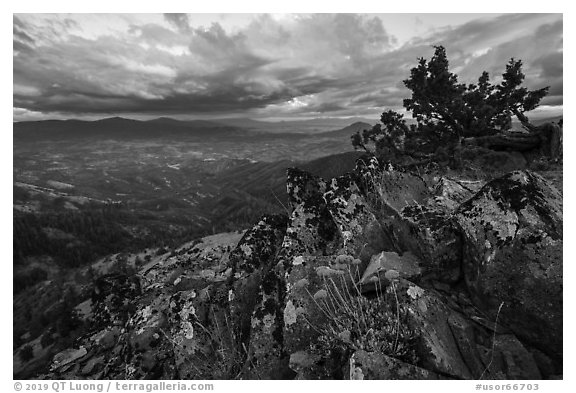 Wildflowers in juniper scablands at sunset, Hobbart Point. Cascade Siskiyou National Monument, Oregon, USA (black and white)