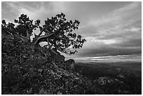 Juniper and wildflowers at sunset, Hobbart Point. Cascade Siskiyou National Monument, Oregon, USA ( black and white)