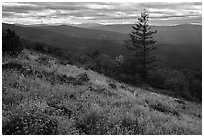 Wildflowers and Siskiyou Mountains. Cascade Siskiyou National Monument, Oregon, USA ( black and white)