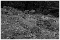 Wildflowers and rocks in clearing. Cascade Siskiyou National Monument, Oregon, USA ( black and white)
