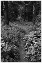 Pacific Crest Trail. Cascade Siskiyou National Monument, Oregon, USA ( black and white)