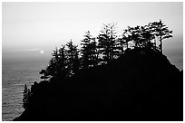 Trees on rock and ocean at sunset, Samuel Boardman State Park. Oregon, USA ( black and white)