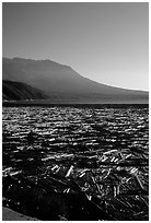 Layer of dead trees on Spirit Lake, and Mt St Helens. Mount St Helens National Volcanic Monument, Washington ( black and white)