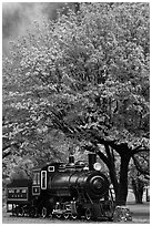 Locomotive under tree in fall foliage, Newhalem. Washington ( black and white)