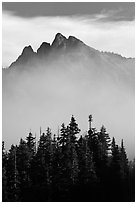 Spruce and mountain above fog. Washington (black and white)