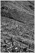 Forests flattened by the eruption lie pointing away from the blast. Mount St Helens National Volcanic Monument, Washington (black and white)