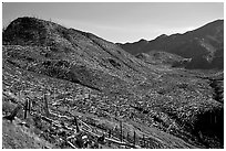Valley littered with millions of trees flattened by the eruption. Mount St Helens National Volcanic Monument, Washington (black and white)