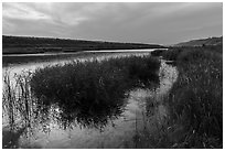 Verdant slough and Columbia River, Ringold Unit, Hanford Reach National Monument. Washington ( black and white)