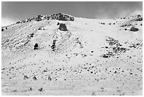 Snowy hill and bighorn sheep, National Elk Refuge. Jackson, Wyoming, USA (black and white)