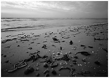 Shells and seaweeds freshly deposited on beach, Sanibel Island. Florida, USA (black and white)