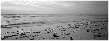 Beach seascape with washed seaweed, Sanibel Island. Florida, USA (Panoramic black and white)